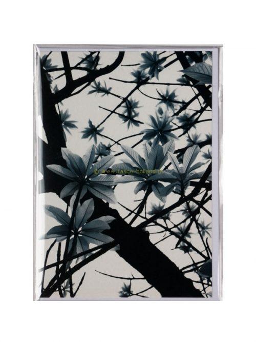 Kaart foto/envelop Green Leaves 13x18 cm