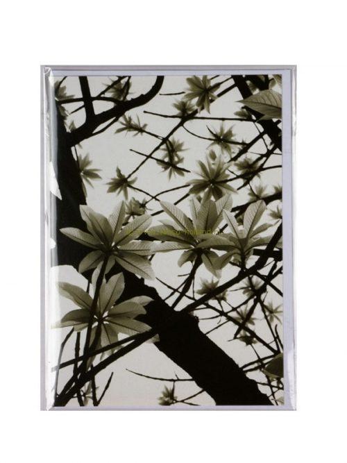 Kaart foto/envelop Green Leaves 2 13x18 cm