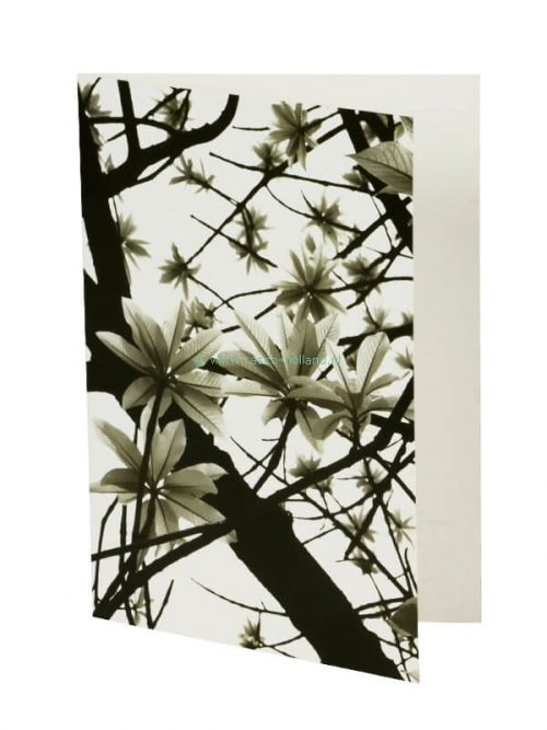 Photo card/envelope Green Leaves 2 13x18 cm