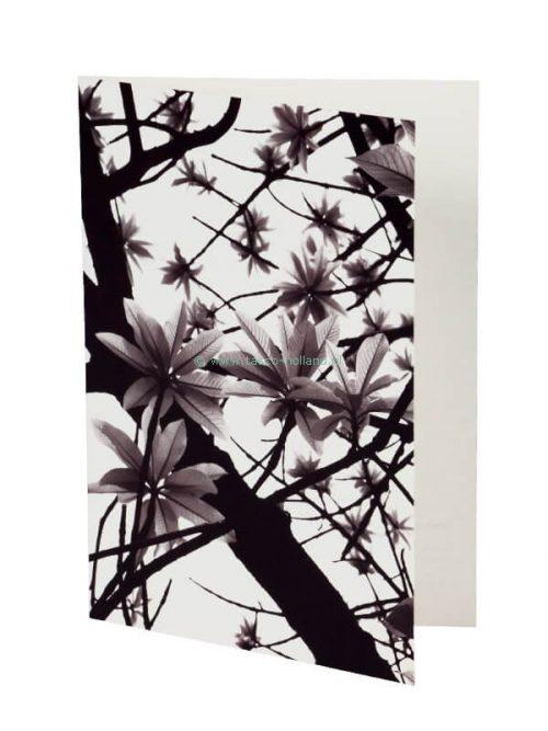 Kaart foto/envelop Green Leaves 3 13x18 cm
