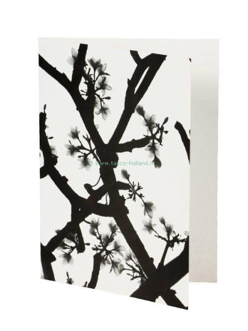 Kaart foto/envelop Blossom 8 13x18 cm