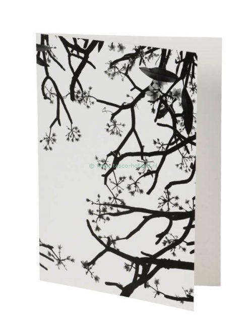 kaart foto/envelop Blossom 10 13x18 cm