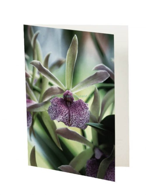 Photo card/envelope Morning Glory 13x18 cm