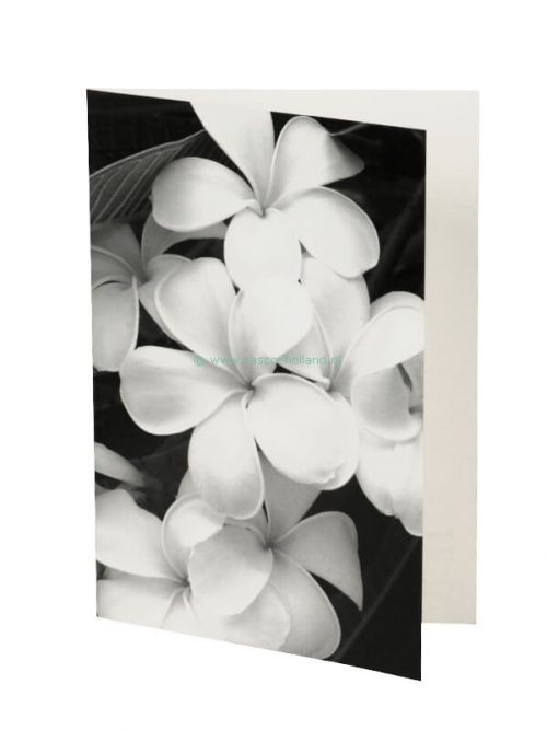 Photo card/envelope Evergreen Frangipani 13x18cm