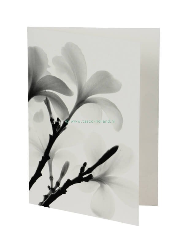 Kaart/envelop Evergreen Frangipani 3 13x18cm